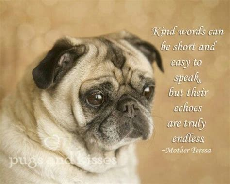 pug saying thank you pug quotes quotesgram