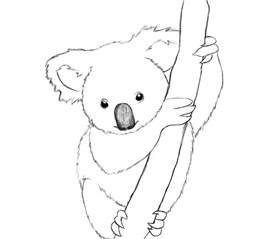 koalas coloring pages printable koala coloring pages coloring me