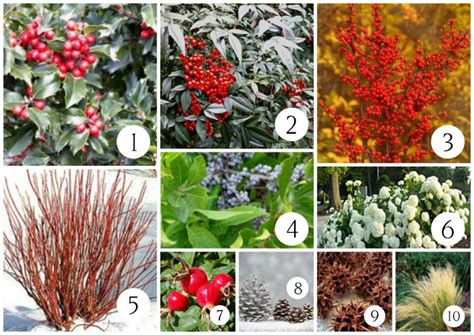 what to plant for christmas decorating harmony hills
