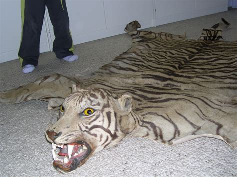 white tiger rug white tiger skin rug www pixshark images galleries with a bite