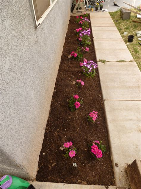 how to start a flower bed how to start a flower bed step by step curb appealer