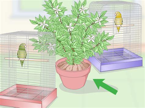 pappagallo in gabbia come impostare una gabbia di pappagallo guadagnare