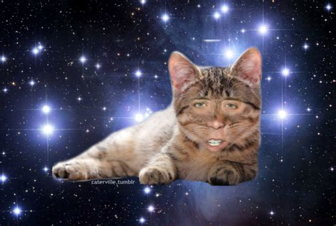 Cat In Space nicolas cage cat in space nicolas