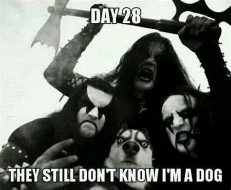 Dog Kiss Meme - day 28 they still don t know i m a dog black metal