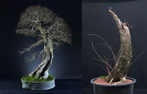 bonsai foundations books bonsai before after foundations inspirations