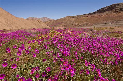 Miracle In The Wilderness 1992 Free Desierto Florido Desierto Florido En Los Alrededores De Do Flickr