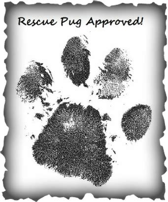 is a pug the right for me is a rescue pug for me hug a pug az rescue adoption grouptucson southern