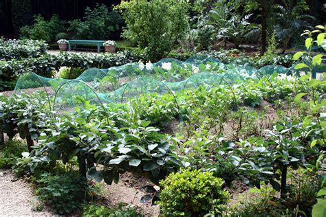 WIKI   Veggie Garden   Waking Times