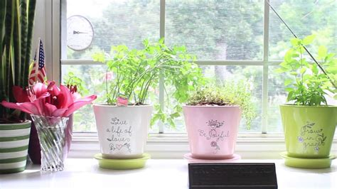 how to grow plants inside window sill gardening part 1