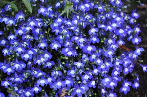 Id 82 Blue Flower gratis stock foto s rgbstock gratis afbeeldingen