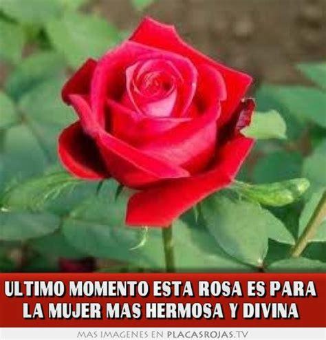 te regalo una rosa la mas hermosa la mas bella de todas ultimo momento esta rosa es para la mujer mas hermosa y