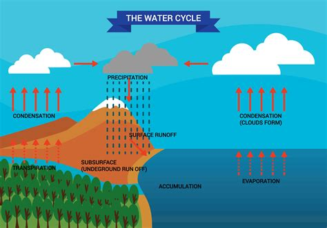 water diagram water cycle diagram vector free vector