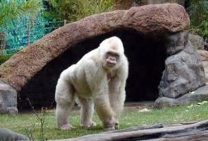 fotos animales zoo barcelona zoo welcome to barcelona