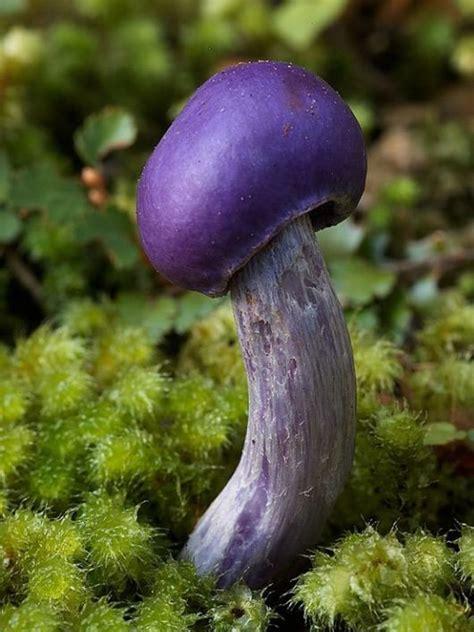 rare  beautiful mushrooms funzugcom