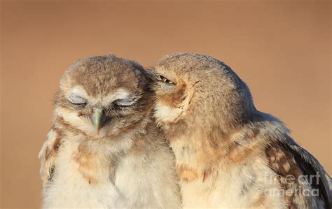 owl lovers owl love photograph by gary michael flanagan