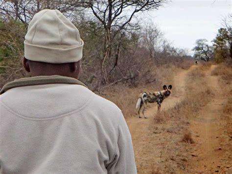 puppies on the run 9 kruger walking safari brett horley safaris