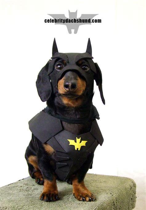 weiner costumes 17 best ideas about dachshund costume on dachshund costumes