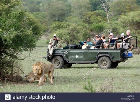 african safari jeep safari jeep and african lion stock photo royalty free