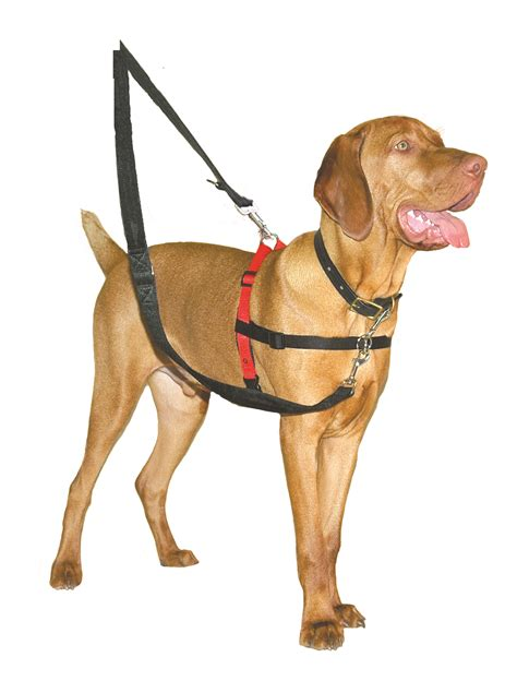 medium harness company of animals halti harness black