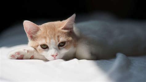 imagenes para fondo de pantalla gatos wallpaper de gatos para descargar