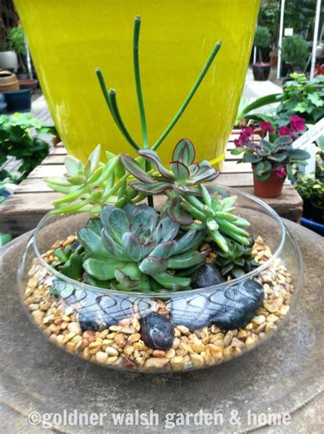 Shallow Planter For Succulents by Shallow Succulent Terrarium And Succulents On