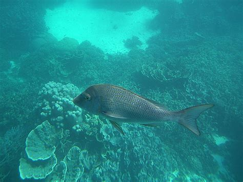 glass bottom boat havelock kerala tour packages tour operator in cochin kerala tour