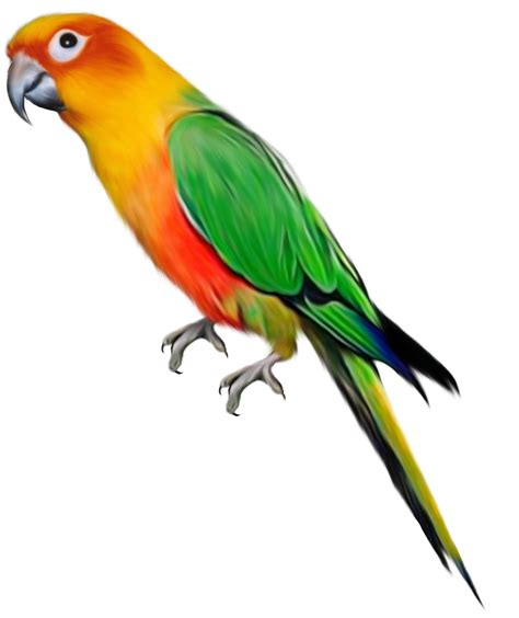 imagenes en png animadas aves png 2 4 taringa