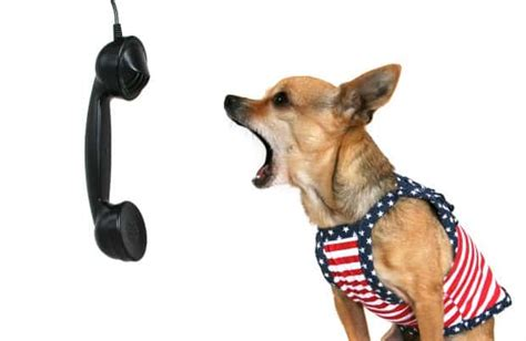 how to stop barking how to stop a chihuahua barking chihuahua tips