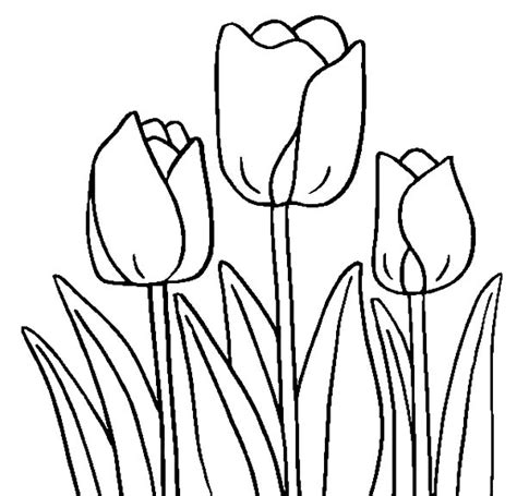 tulips flowers coloring pages and tulips crafts spring