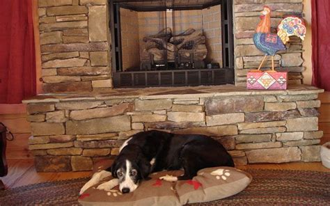 Pet Friendly Cabins Asheville Nc by 16 Best Images About Vacation For Your Dogs On
