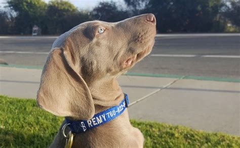 what to put on tag the most important info to put on a s id tag giveaway petpace smart collar