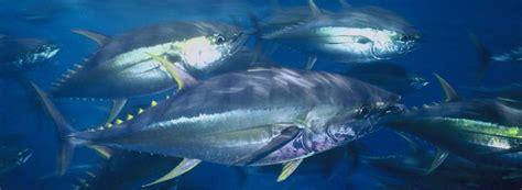 bid fish oceans