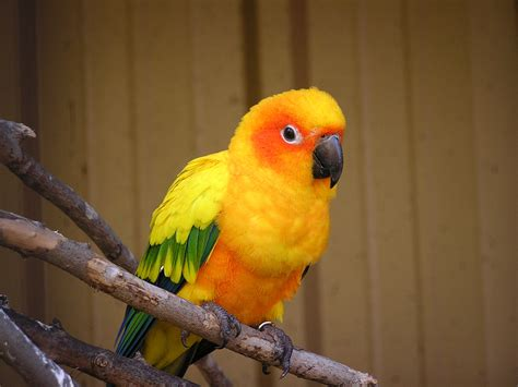 baby parrot called sun conure caldwell zoo