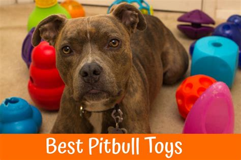 best toys for pitbull puppies pitbull toys wow