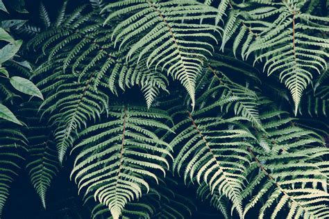 patterns in nature youtube fern 4k ultra hd wallpaper and background 4875x3254 id