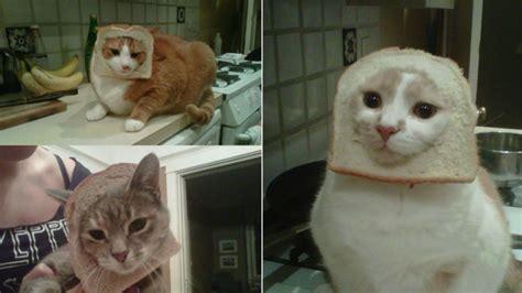 Cat Toast Meme - hot new internet meme breading cats