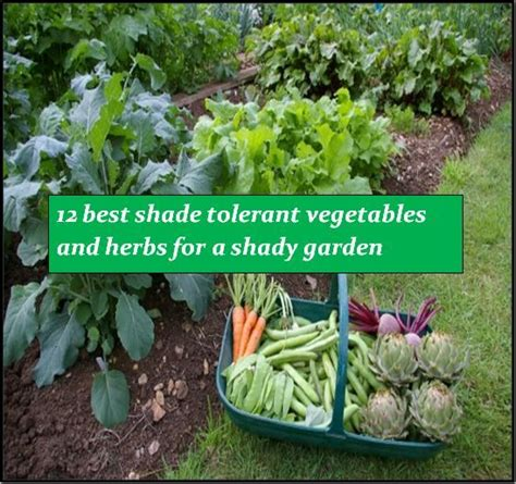 What Garden Vegetables Like Shade Pin By On Garden