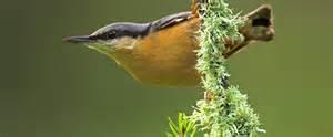 garten vogel garden birds images and names