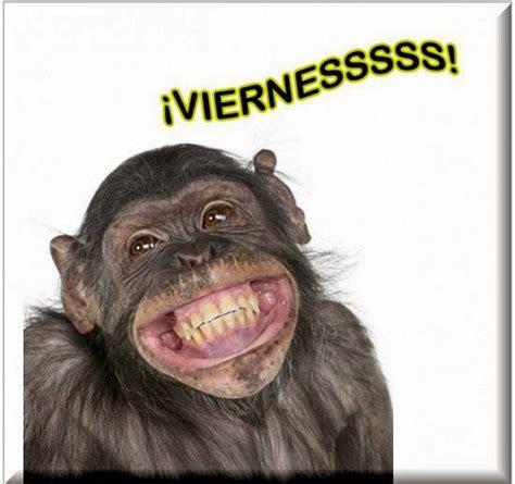 im 193 genes de monos chistosos con frases monos feos chistosos www imgkid com the image kid has it