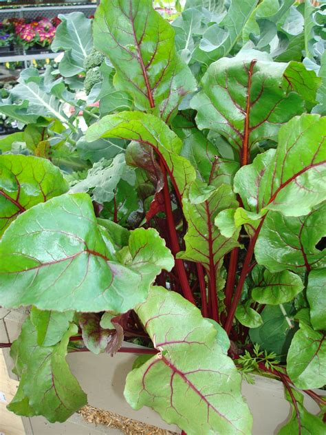 what to plant in summer vegetable garden planting a late summer vegetable garden plant barn