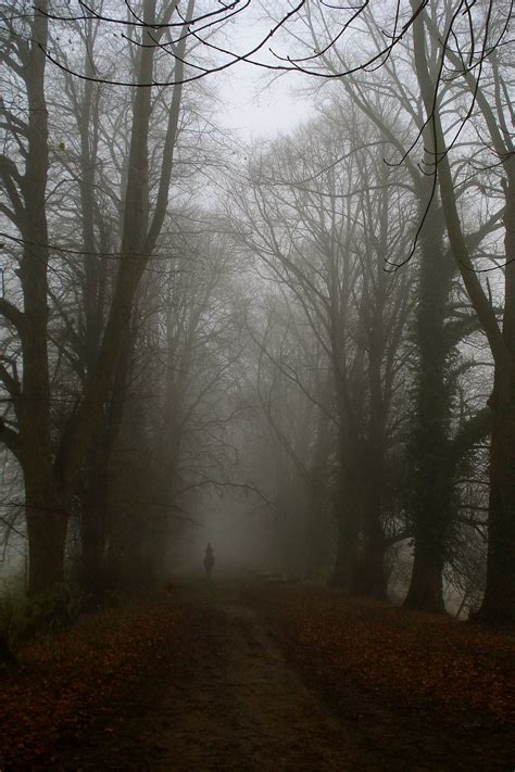 In The Mist by File Ghost Rider In The Mist Jpg