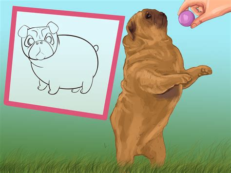 how to clean a pug 3 ways to clean a pug s wrinkles wikihow