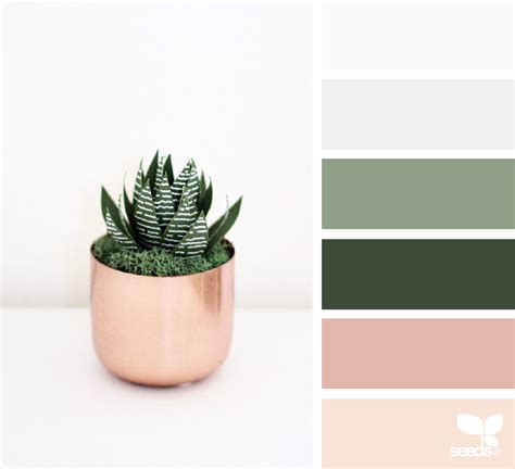 seeds color palette paper succulents color palettes color schemes colour