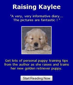 dog house training methods 7 best images about puppy training on pinterest barking plays and common sense