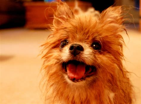 cutests dogs dogs dogs photo 13883009 fanpop
