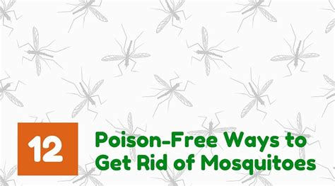 best way to get rid of mosquitoes in your backyard 28 12 poison free natural ways to get rid of mosquitoes