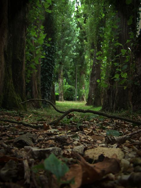 The Forest Floor by Upon The Forest Floor By Maizy138 On Deviantart