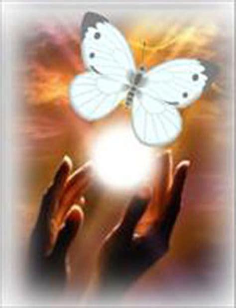 imagenes de mariposas blancas volando encomienda de barcelona la aparici 243 n de la misteriosa