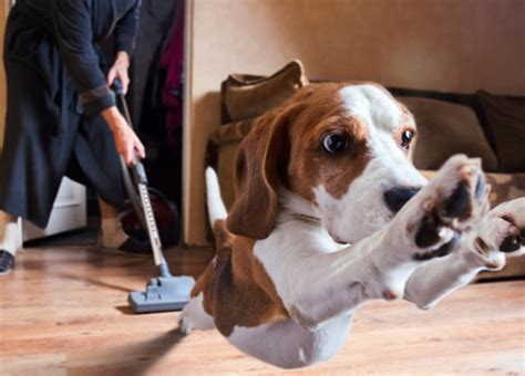 pet hair vacuum cleaner  cleaning  home  fun