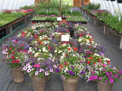 Beautiful Planters by Beautiful Flower Pots Shortgrass Greenhouse